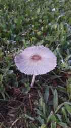 Lonely Mushroom by SharkGirl15