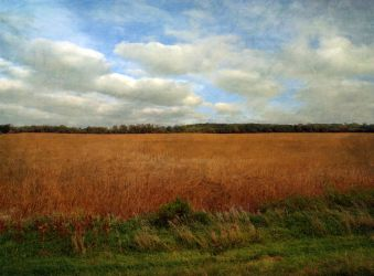 After the Harvest by SolStock