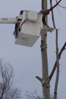 Tree Cutter on Illinois Ave., Steven Point WI 1:59 by Crigger