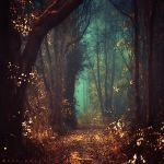 Way of the Wizard by Oer-Wout