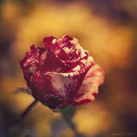 Fraise-Vanille by Sweet-Nature