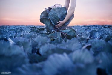 Cabbage Mind - pt II by CorneliaGillmann