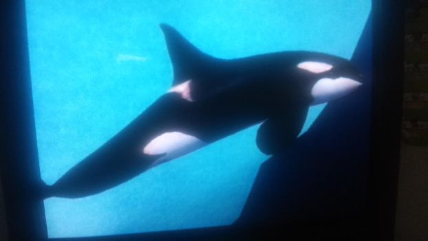 Orca of Antarctic by Horselover2471226