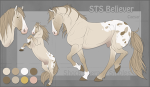 STS Horse- Caesar by ShockTherapyStables
