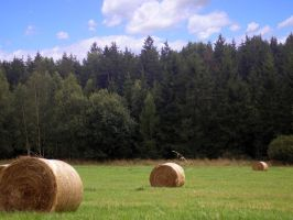Chilling Bales by Jemany