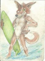 Dingo dog surfer who has no clue. by Nayikee