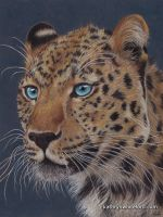 Amur Leopard by KathrynWhiteford