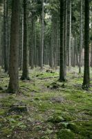 Forest Stock 7 by Sed-rah-Stock