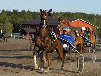 Harness racing 5 by wakedeadman