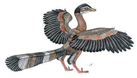 Paleo-Colours: Archaeopteryx by PaleoAeolos