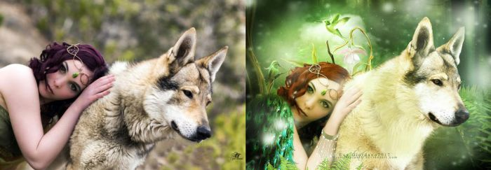 Beforeandafterwolf by Miss-deviantE