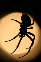 Spider2 by daishi100