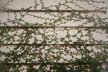 Vines on a Wall by LauraAnnTull