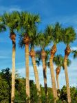 Palm Trees by TropicalFractals