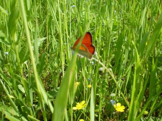 Butterfly in the Grass by HeinousFlame