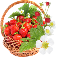 Strawberry Flowers by KmyGraphic