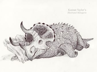 Triceratops sleeping by IllustratedMenagerie
