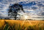 The Tree in Cropland by Entons