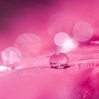 Pink Love by AstridT