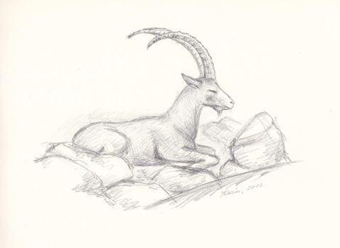 Alpine ibex by KarinM