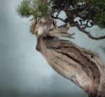 Dryad by Louvette