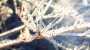 Winter Frost I by RockLou