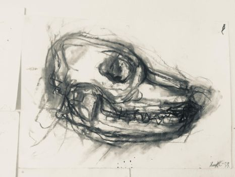 charcoal study : skull of a canine 2017 by CharaSweetCheeks