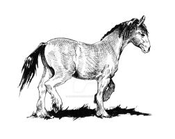 Just a horse drawing by Adoulie
