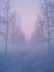 Foggy Pathway lined with trees by AStoKo