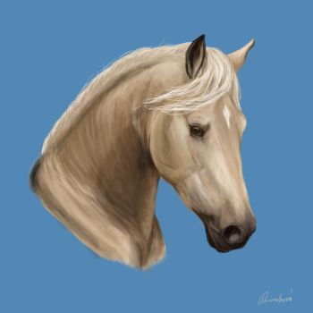 Andalusian horse by Nikaca