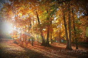 Fall in the Carolinas. by ScarahScrewdriveR