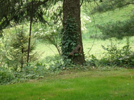 Squirrel on the Tree by SacredJourneyDesigns