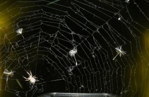 Spider Web by kbcollins