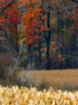Shades of Autumn 2014.XXII by MadGardens