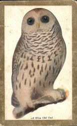 A Wise Old Owl by Yesterdays-Paper