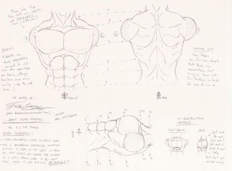 Were-Studies 1: The Torso by ACommonMisconception