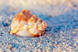 Golden Hour Sea Shell by ian-roberts