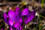 Spring friends by MDelicata