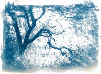 Cyanotype 1 by Viszoczky