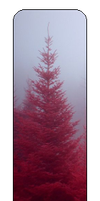 F2u Red Tree by Evan-escence