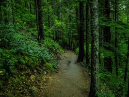 Path Through the Forest by KRHPhotography