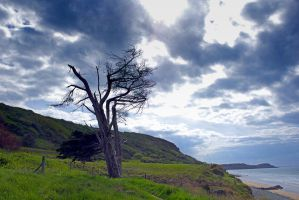 8246 The old tree on the seashore by RealMantis