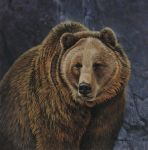 The Heavyweight - Grizzly by CitizenOlek