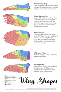 Science Fact Friday: Wing Shapes by Alithographica