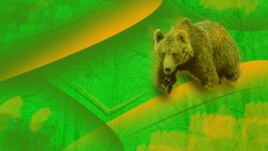 Bear HD wallpaper by frazza7