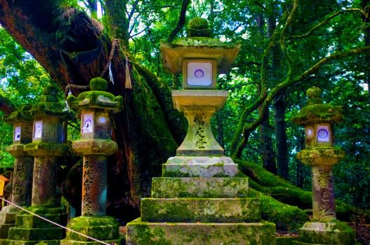Shrines in a forest in Nara, Nara-ken, Japan by kingtobbe