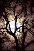 moon oak by Land3R