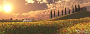 Tuscan Poppy Hill by OfTheDunes