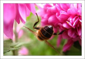 Bee by MichelleMarie