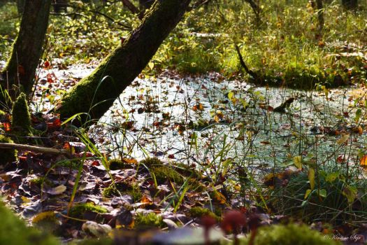 Forest floor by MissKiks